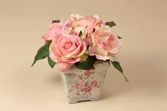 美丽的粉玫瑰