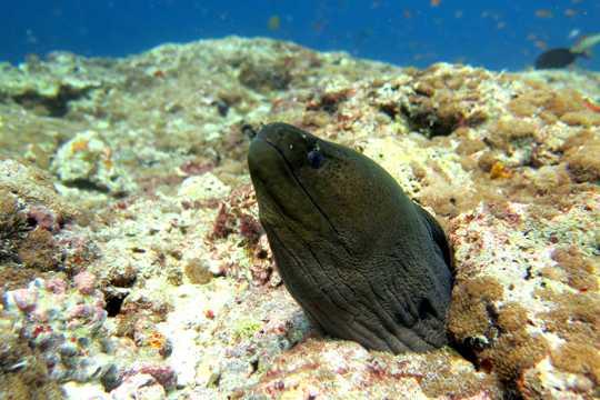 水里的鳗鱼图片