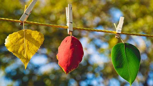 秋季唯美树叶图片