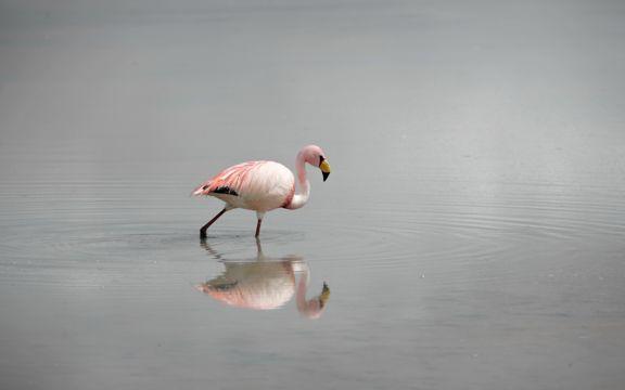孤单的火烈鸟