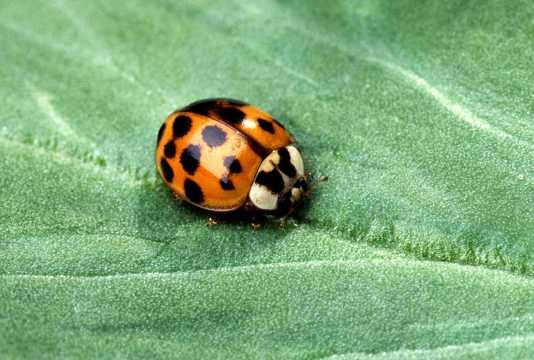 彩色七星小瓢虫图片
