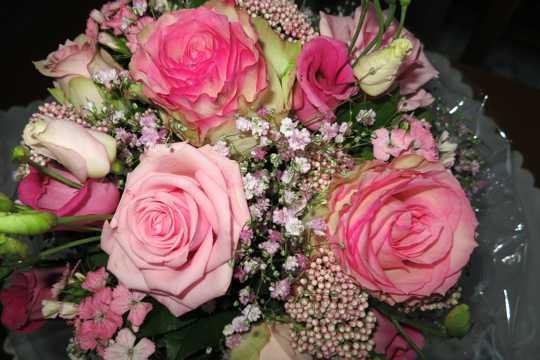 粉红色玫瑰花束图片