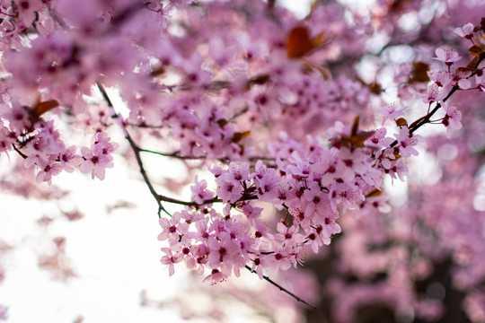 浪漫粉色花朵花卉图片