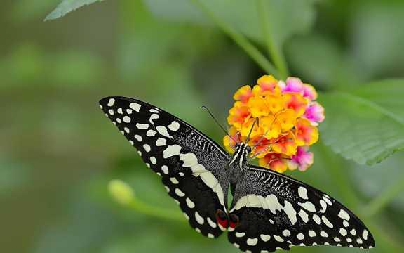 彩色的蝴蝶图片