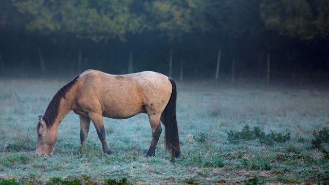 草地上的骏马