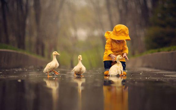 乖巧的小鸭子