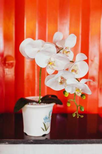 兰花盆景图片大全观赏