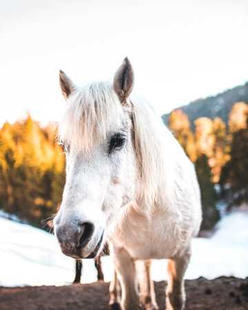 白色小马驹图片