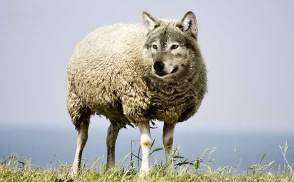 披着羊皮的狼图片