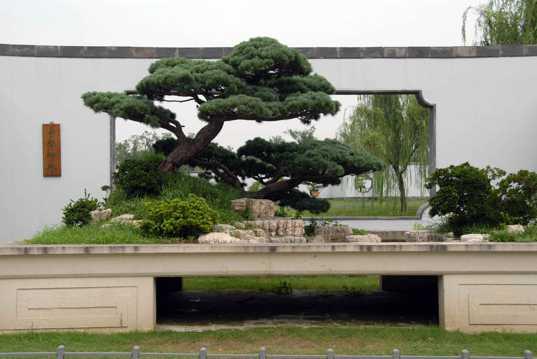 扬州盆景图片