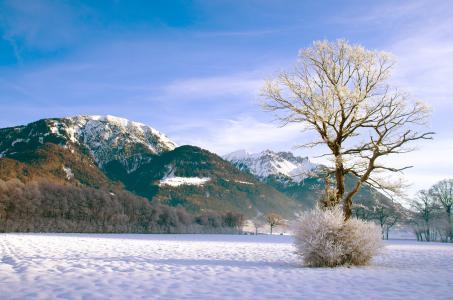 树,山,冬天,布什,森林,雪