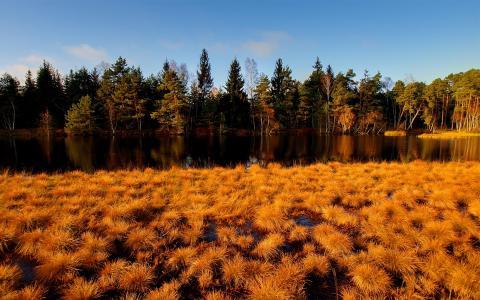 黄色,河,秋天,草,森林