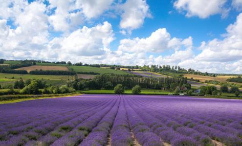 城堡农场,Shoreham,肯特郡,英格兰,Shoreham,肯特郡,英格兰,田地,薰衣草,云