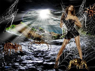蜘蛛网,蜘蛛,山,景观