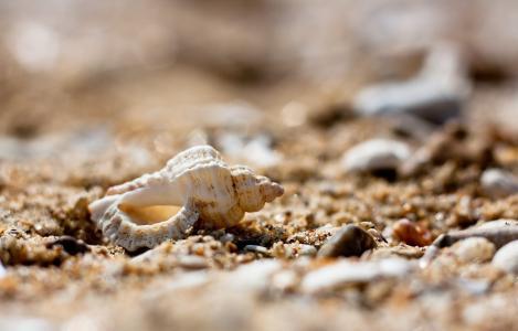 壳,沙子,石头,石头,宏
