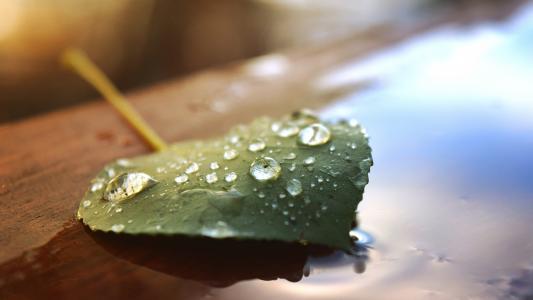水,滴,上一个,叶,壁纸