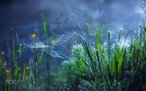 蜘蛛网,散景,草,宏,露水