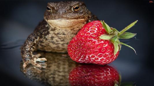 蟾蜍,草莓,浆果