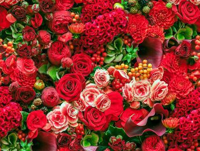 玫瑰,大丽花,秋海棠,卡拉斯,吻