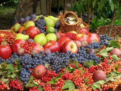 荚vib,葡萄,苹果,梨,李子,浆果,水果,收获
