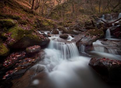 河,梯级,秋季,森林,石头