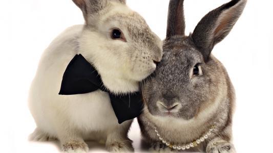 兔子,蝴蝶,一起