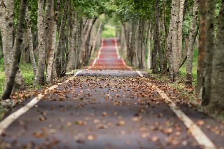唯美秋季安静的小路