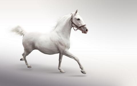 白马,背景