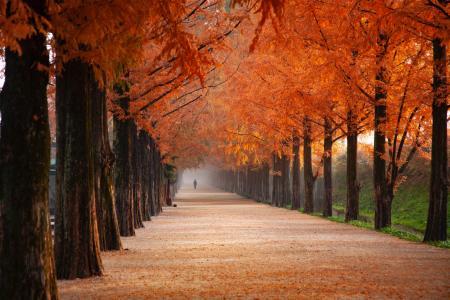秋季林荫小道唯美风景
