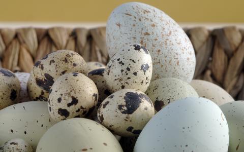 发现鸡蛋,篮子