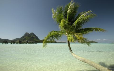 水,棕榈,山,房屋