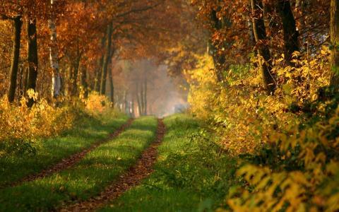 秋季幽静小路唯美意境