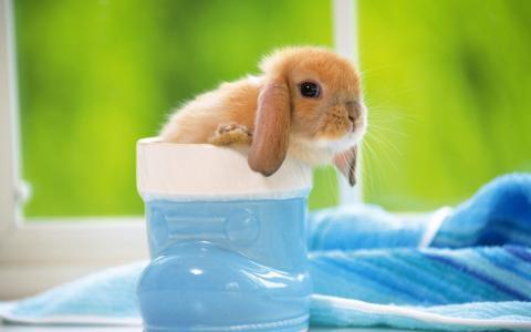 兔子,蓝色的靴子