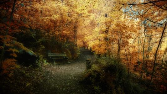秋季,森林,景观,壁纸