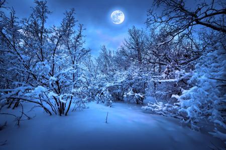 圣诞快乐,新的一年,魔术圣诞之夜,圣诞树
