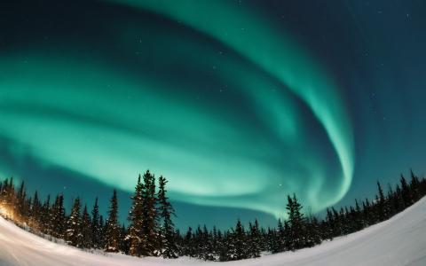 北极光,森林,夜晚