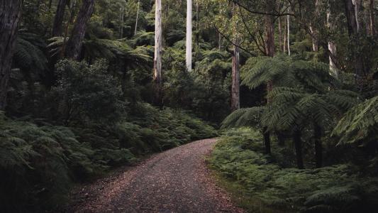 僻静幽深的小路