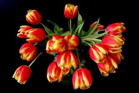 橙色,鲜花,花束,郁金香