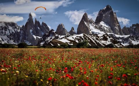 领域,开花,罂粟花,山