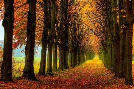 森林,道路,多彩,路径,叶子,场,秋季,性质,树木
