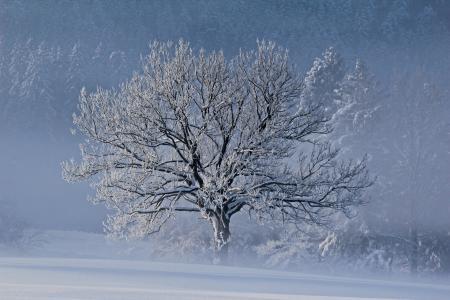 冬天,雪,霜,树