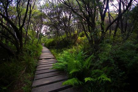 森林,树木,植物,路径,景观