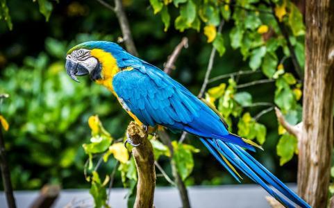 鹦鹉,金刚鹦鹉,鸟,羽毛,颜色