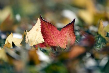 叶子,叶子,秋天