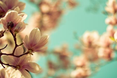 玉兰,鲜花,分支机构,春天