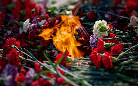 鲜花,康乃馨,火,胜利日
