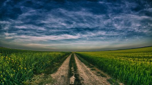 天空,场,道路,强奸,小麦,收获
