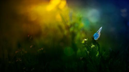 蝴蝶,对,草,壁纸