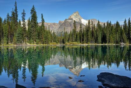 俄亥俄湖,幽鹤国家公园,加拿大,加拿大,湖,反射,森林,杉树,山