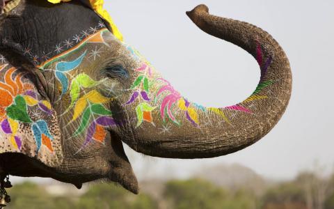 大象,壁纸
